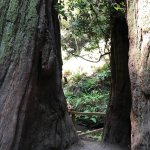 Muir Woods National Monument Foto
