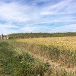 Walking up through the wheat