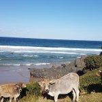 Kob Inn Beach Resort Foto