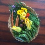 Chef's garden harvest
