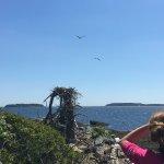 Foto de Cabbage Island