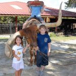 Photo opportunity on a real tame longhorn bull at Mayan Ranch