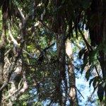 Lamanai Mayan Site and New River Tour