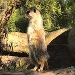 The Meerkats were adorable