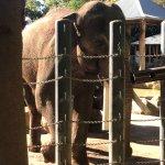 Loved the elephants