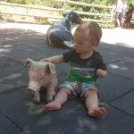 Kids Petting zoo area