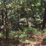 Nags Head Woods Ecological Preserve Foto