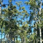Foto de Parque del rey y Jardín Botánico
