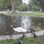 The wildlife near the swan boats is beautiful...