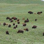 Zdjęcie Custer State Park