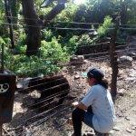 muestra del osos de anteojo en la Reserva ecológica de cHappri