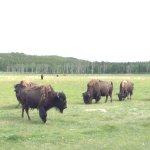 Foto de Yukon Wildlife Preserve