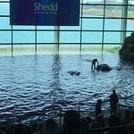 Foto de Shedd Aquarium