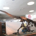 Terry Lee Wells Nevada Discovery Museum의 사진