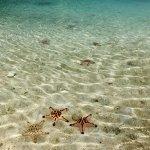 Giant starfish on the beach