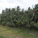 Photo de Pelwehera Village Resort
