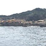 Photo of Archipelago Wildlife Cruises