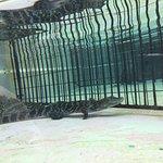 Photo of Atagawa Tropical & Alligator Garden