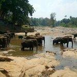 elephants posing for pics