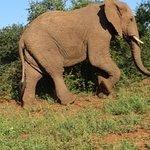 Foto de Zululand Tree Lodge