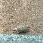Foto de Rajiv Gandhi Zoological Park
