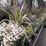 Plant display at Stewarts Christchurch Garden Centre