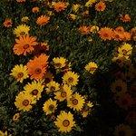 Walter Sisulu National Botanical Gardens Foto