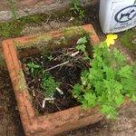 Cigarettes in plant pot
