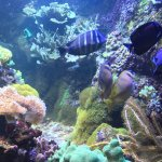 Photo of National Aquarium