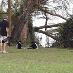 Colobus Monkeys come to eat