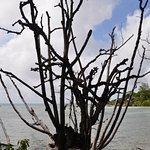 Photo de Curieuse Island