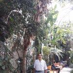 Mediterranean Plants on display - US Botanical Gardens