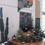 Cactus display - US Botanical Gardens