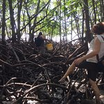 Travelling through the mangroves