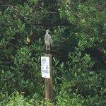 """Photo of J.N. """"Ding"""" Darling National Wildlife Refuge"""