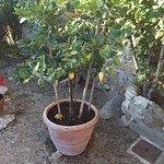 Lemon tree! They were everywhere