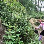 Su my trekking guide