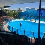 Spectacle dauphins à Zoomarine