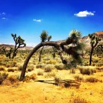 Photo de Joshua Tree National Park