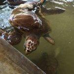 Sea Turtle Protection Association Foto