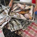 Grouper, red snapper, sea bass, milano-i, sardines, scorpion ...