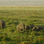 Photo de Amboseli National Park