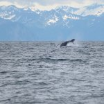 A humpback being active