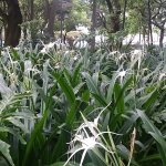 Asian plants in park.
