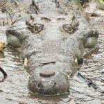 Croclandia & The American Crocodile Sanctuary