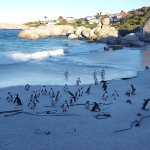 Photo of Boulders Beach