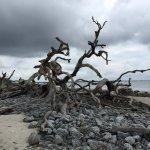Driftwood Beach Foto