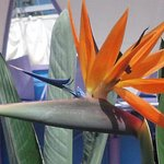 Bird of Paradise right outside our room.