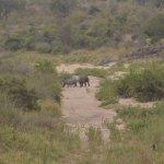 Rinoceronti dal balcone del ristorante
