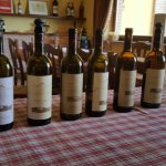 Foto de Bluone - Food and Wine Tours in Italy